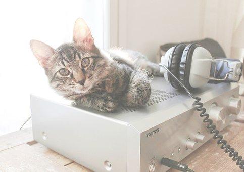 Cat, Amplifier, Headphones, Springtime, Sun, Technology