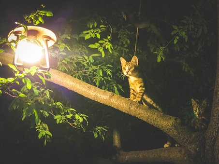 Cats, Animals, Light, Bulb, Tree, Leaves, Branches