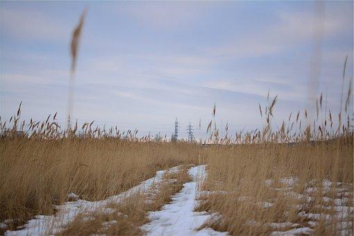 Plants, Fields, Winter, Snow, Power Lines