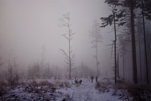 Fog, Trees, Snow, Winter, Forest