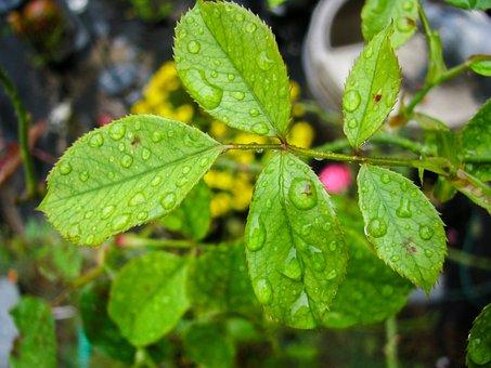 Water, Drops, Plants