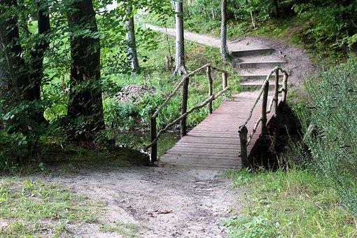 Forest, Way, Landscape, The Path, Spacer, Alley, Bridge