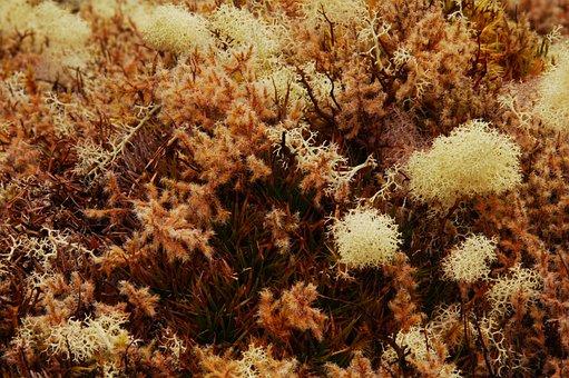 Moss, Moisture, Nature, Texture, Forest, Macro, Coffee