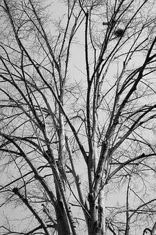 Tree, Branches, Autumn, Forest, Branch, Nature, Leaves