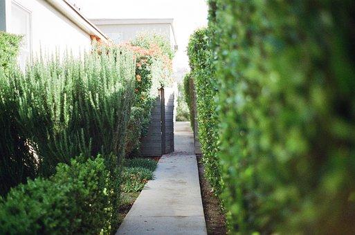 Walkway, Stones, Garden, Green, Plants, Flowers, Bushes