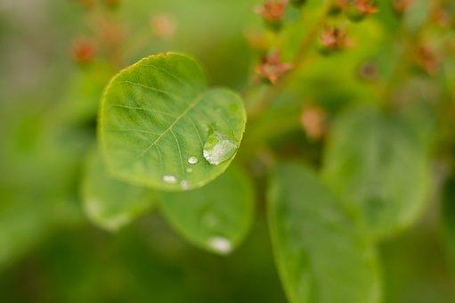 Water Drop, Leaf, Leaves