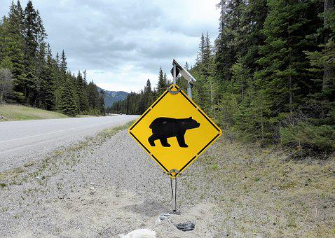 Road Sign, Warning, Bear, Danger, Nature, National Park