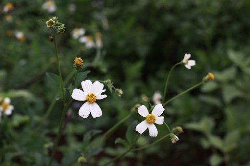 Flower, White, Macro, Spring, Garden, Decorative, Bloom