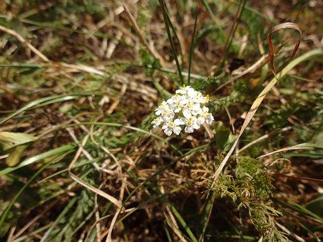 Flower, Spring Flowers, White, Macro Chichewa, Doga