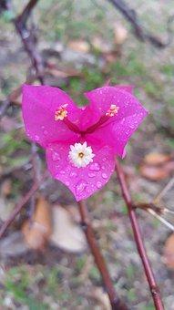 Flora, Pink, Flower, Spring, Nature, Summer, Blossom