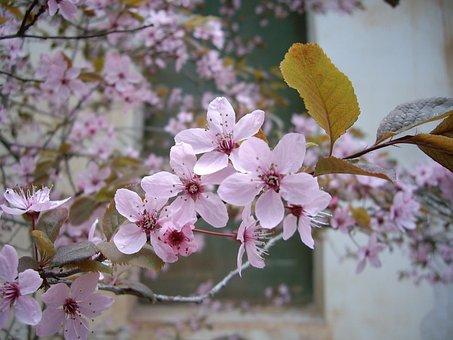 Flower, White, White Flowers, Spring