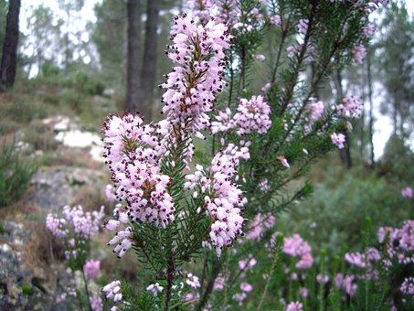 White Flower, Wild Flower, Nature, Wild, Spring, Plant