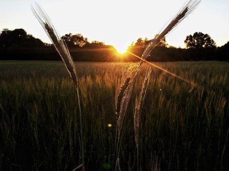Evening, Nature, Sunset, Abendstimmung, Evening Sun
