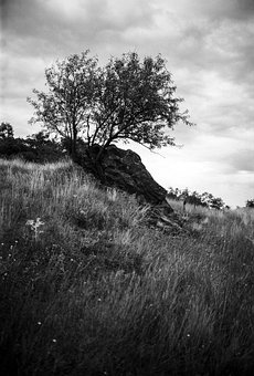 Gloomy, Tree, Rock, Nature, Black And White, Monochrome
