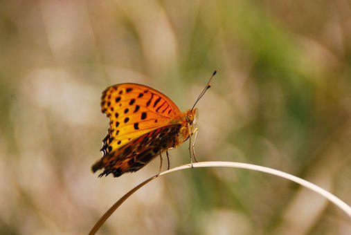 Butterfly, Bug, Insect, Nature, Animal, Wing, Wildlife