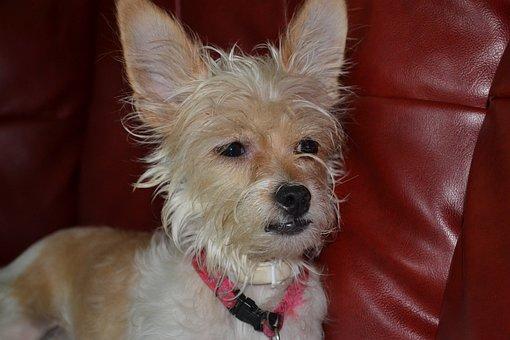 Animal, Dog, Pet, Cute, Puppy, Mammal, Adorable, White