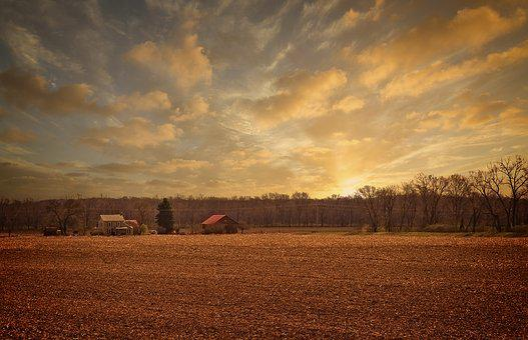 Sunrise, Scenery, Trees, Artistic, Art Print