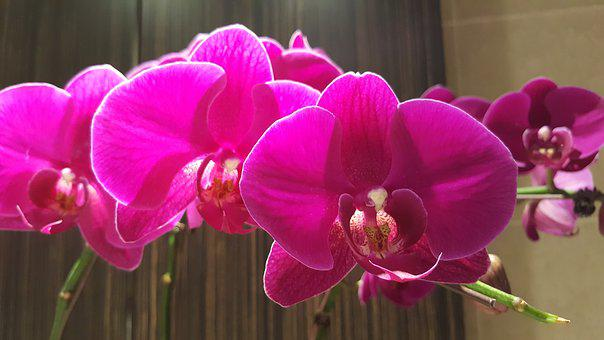 Orchard, Flora, Garden, Spring, Pink, Natural, Blossom