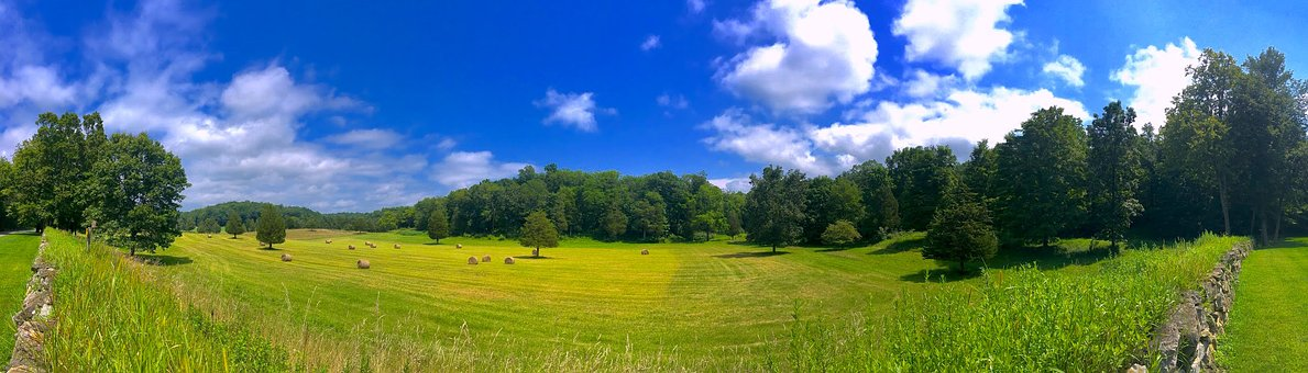 Field, Trees, Sunny, Summer, Green, Nature, Landscape