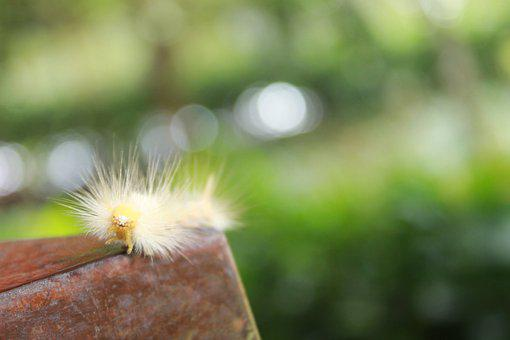 Caterpillar, Animal, Nature, Macro, Worm, Insect