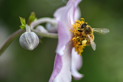 Bee, Flower, Forage, Macro, Insect