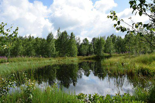 Marsh, Nature, Green, Water, Pond, Mare, Landscape