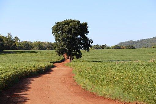 Agribusiness, Plantation, Mato Grosso Do Sul, Field