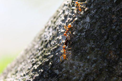 Ant, Tree, Sharing, Insect, Nature, Macro, Natural