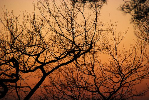 Tree, Winter, Branch, Nature, Forest, Sky, Scenic, Red