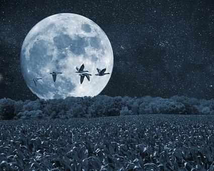 Night, Moon, Birds, Scenery, Trees, Artistic, Art Print