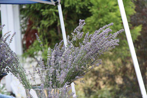 Lavender, Country, Table, Flower, Nature, Purple, Plant