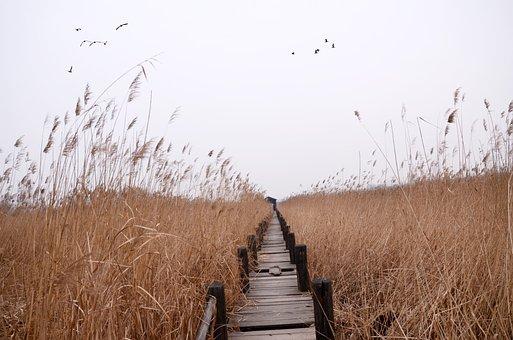 Chen Bridge, The Yellow River Wetland, Small View