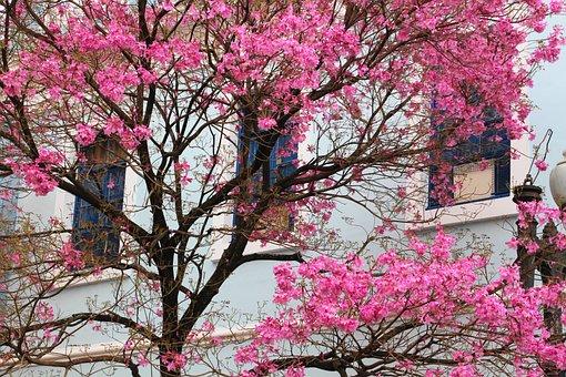 Tree, Porto Alegre, Brazil, Tree Colorful