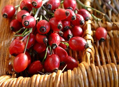Rose Hip, Red, Collected, Fruit, Nature, Plant