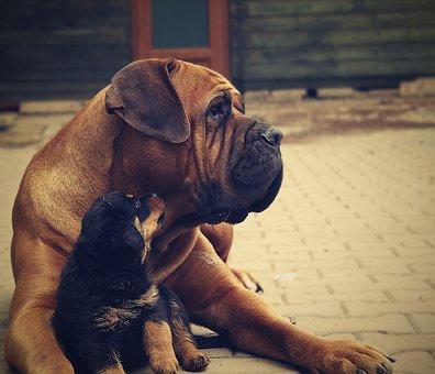 Rottweiler, Puppy, Dog, Background, Thoroughbred