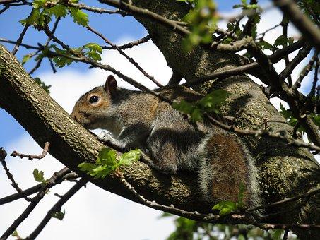 Squirrel, Nature, Animal, Mammal, Wildlife