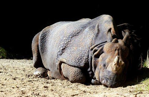 Rhino, Animal, Mammal, Big Game, Zoo, Animal World