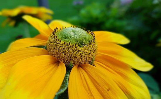 Blossom, Bloom, Flower, Summer Flowering, Flower Garden