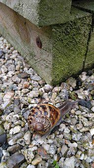 Stones, Wood, Snail, Colors, Texture, High Detail