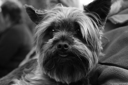 Dog, Black, White, Animal, Doggie, The Sight Of A Dog