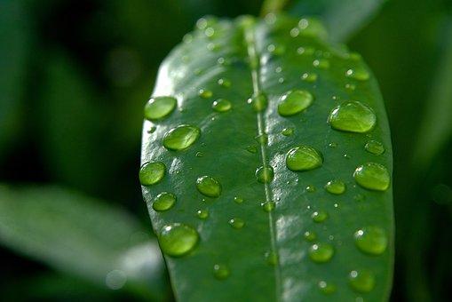 Drop Of Water, Drip, Leaf, Macro, Liquid, Water, Nature