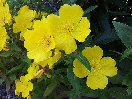 Yellow, Flowers, Flower, Plant, Yellow Flower