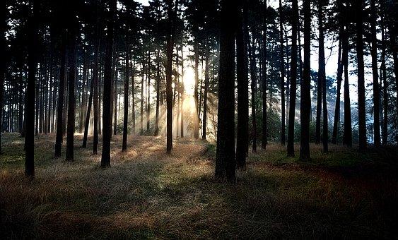 Forest, East, Sunrise, Nature, Landscape, Morning