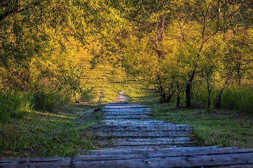 Nature, Steps, Forest, Park, Way, Landscape, Grass