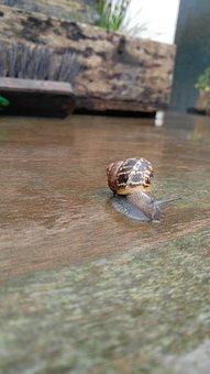 Little, Snail, Garden, Rainy Day Snail