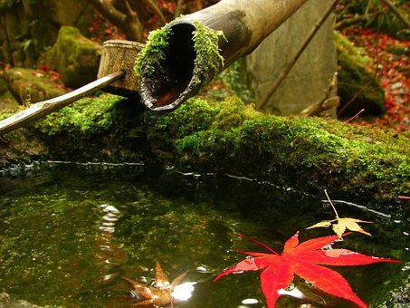 Japan, Autumnal Leaves, Kyoto, Maple, Moss, Maples
