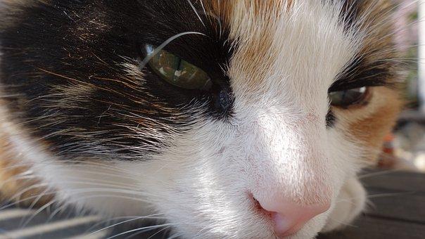 Cat, Cats, Pet, Cat Face, Cute, Sweet, Nice, Mammal