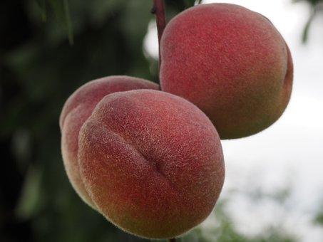 Peach, Fruit, Healthy, Peach Tree, Eat, Fruits
