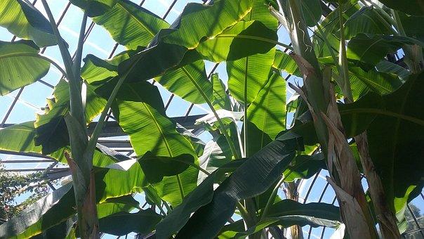 Picture, Plants, Sky, Nature, Green, Design, Garden