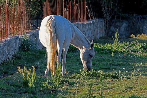 Horse, Mare, Sunshine, Shadows, Meadow, Wildflowers